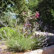 Les fleurs de cactus